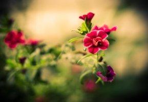 예쁜 장미꽃 배경화면 쓰세요.
