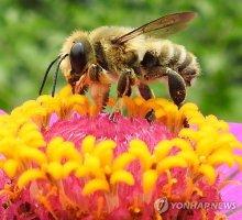 꿀벌의 여름 나기