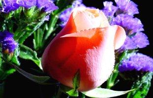 ♧∼아름다운 꽃 이미지