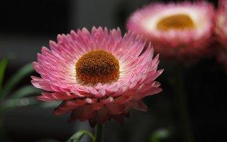 오는 6월 엑스코에서 열리는 '대구 꽃박람회'를 아시나요?