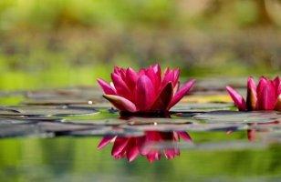 아름다운 꽃이미지 - 1