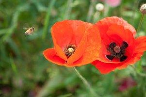 아름다운 꽃 사진 / 꽃 배경화면
