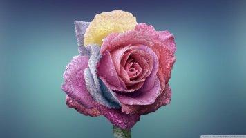 도종환 - 흔들리며 피는 꽃