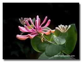 희귀한 멋진꽃들의 영상