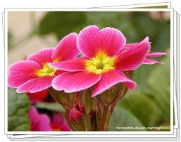 아름다운 꽃