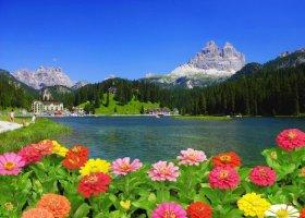 1 - 아름다운 꽃 풍경