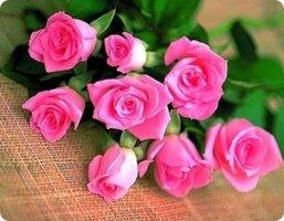 아름다운 꽃 이미지