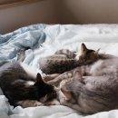 고양이 일상 : 나도는 마르코를 너무 좋아해