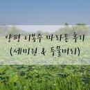양평 이봉주 마라톤 참가 후기(feat. 세미원 & 두물머리 힐링 나들이)