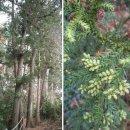 겨울문턱 '나무야 나무야'