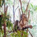 브리즈번 여행 : 론파인 코알라 생추어리. 코알라x캥거루 = 귀여워!