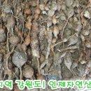 [판매] 송근봉 180508