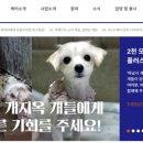 '케어' 박소연, 뒤에서 '250마리 몰래 안락사?'..뿔난 직원들