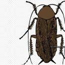 바퀴벌레 퇴치방법 붕산과 계피