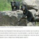 퓨마보다 위험한 야생동물 지리산 반달곰