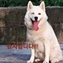 [아이즈원 조유리] 조유리 팬의 작년 성지글
