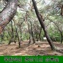경주 가볼만한곳 소나무로 둘러싸인 삼릉숲