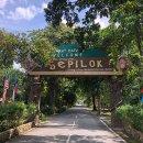 오랑우탄 보러 말레이시아 세필록에 다녀온 썰 (6) 드디어 오랑우탄을 보다