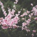 이야기가 있는 시 『봄 이야기』 박수림 시