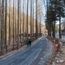 [대전] 장태산 자연휴양림 - 메타세쿼이아의 천국