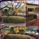 [대통남의 조경_37] 왕벚나무와 벤치4개 남부기술교육원 휴게소