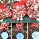 신토불이 장수마을 경북 의성마늘 50% 맛보기 이벤트