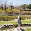 [경북] 벚꽃눈을 즐긴 경북 예천 곤충 생태원