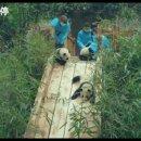 세계 최초 '자이언트 판다' 다큐 영화 《PANDAS》 티져 (귀여움 주의..)