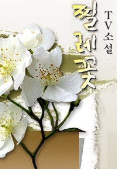 TV소설 찔레꽃 164회 다시보기